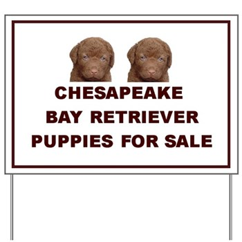 Chesapeake Bay Retriever For Sale Sign - Puppies