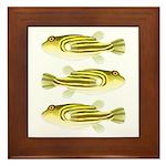 Nile Puffer fish Framed Tile