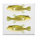 Nile Puffer fish Tile Coaster