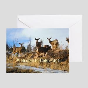 Colorado Mule Deer Herd on Mountain Hillside Greet