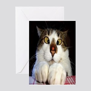 Funny Crossed Eyed Cat And Ladybird Greeting Cards