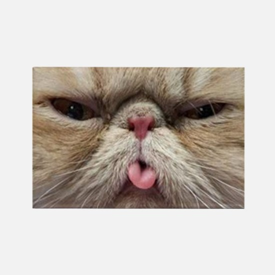 Persian Cat Sticking Tongue Out Magnets