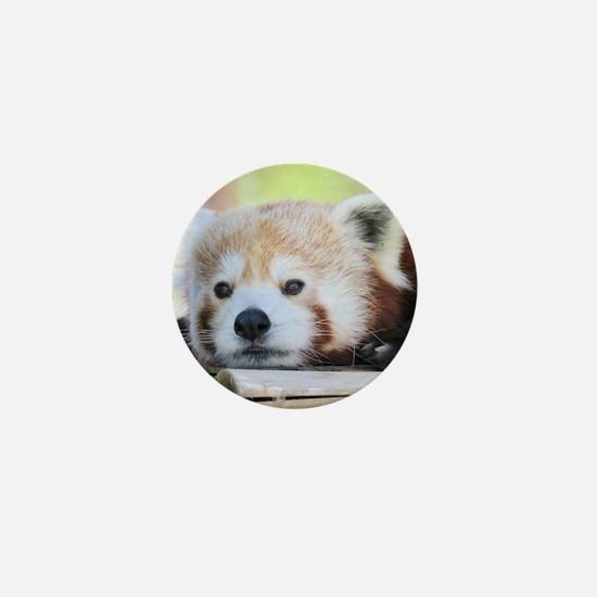 Funny Red panda Mini Button
