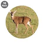 Forked Horn Buck 3.5