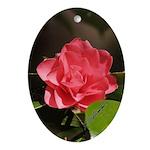 Pink Pagoda Camelia - Oval Ornament