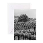 napa valley scrub oak, vineyard greeting cards