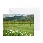 napa valley silverado trail wildflowers vineyard