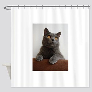 chartreux peeking Shower Curtain
