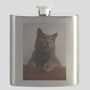 chartreux peeking Flask