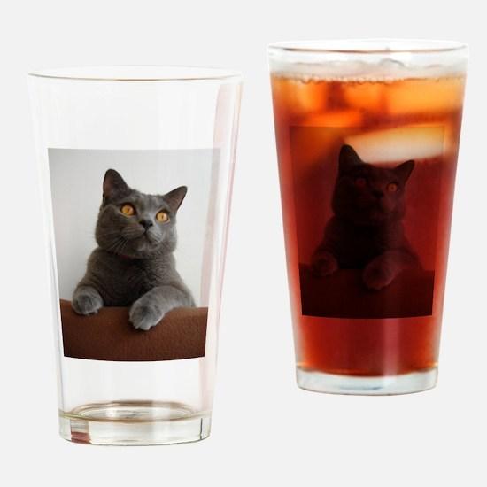 chartreux peeking Drinking Glass