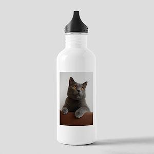 chartreux peeking Water Bottle