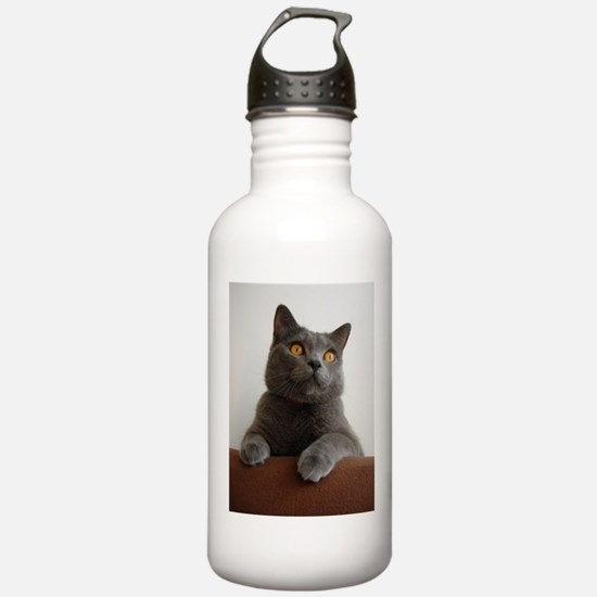 chartreux peeking Water Bottle
