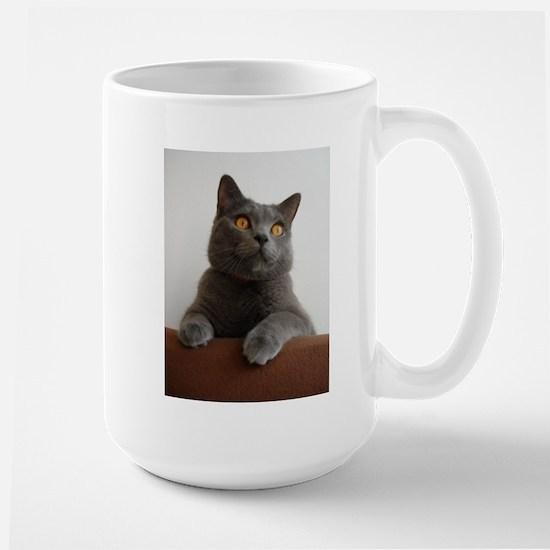 chartreux peeking Mugs