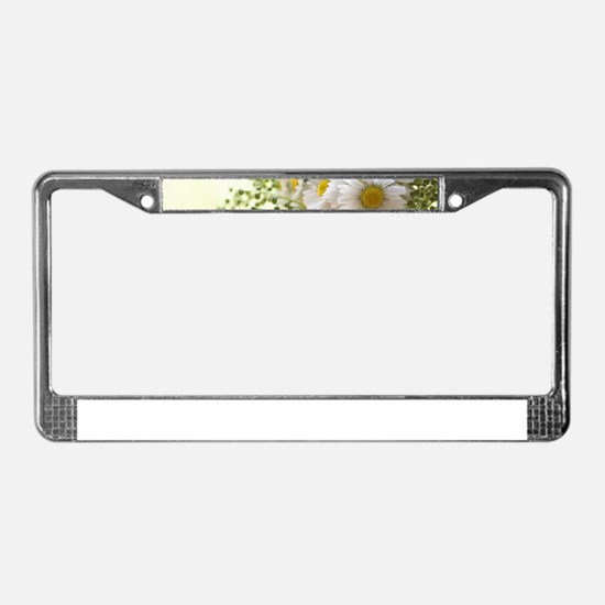 Bouquet of daisies in LOVE License Plate Frame