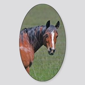 Horse early summer Sticker (Oval)