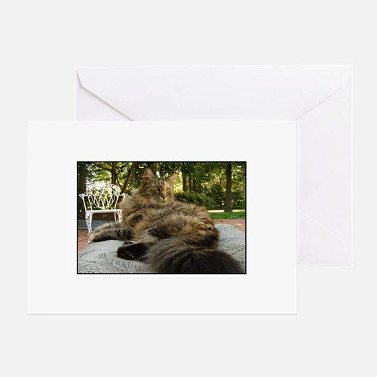 Maine Coon cat bushy tail Greeting Cards