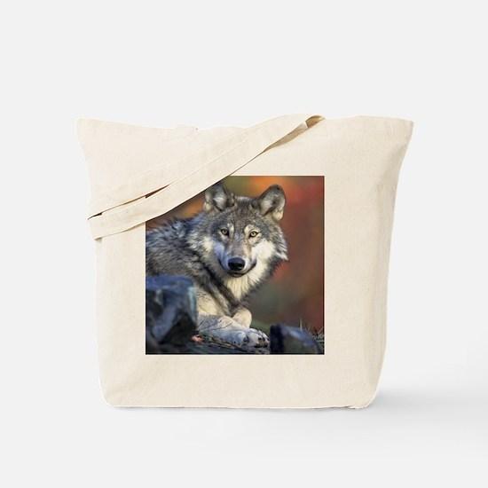 Cute Mens wolf Tote Bag
