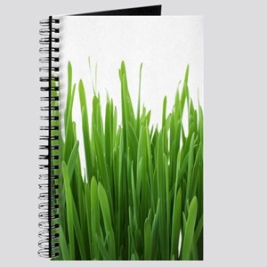 Fresh green grass on white backround- phot Journal