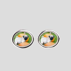 Pug in pumpkins Oval Cufflinks