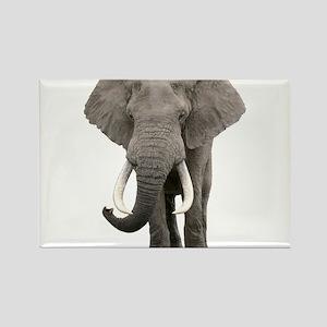Realistic elephant design s Magnets
