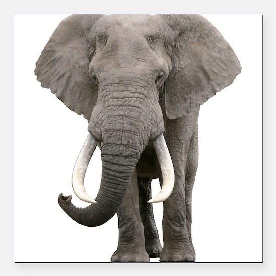 """Realistic elephant desig Square Car Magnet 3"""" x 3"""""""