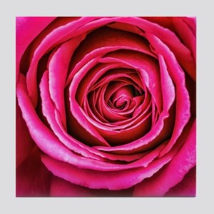 Hot Pink Rose Closeup Tile Coaster