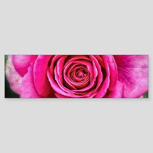 Hot Pink Rose Closeup Sticker (Bumper)