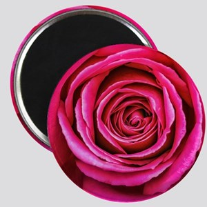 Hot Pink Rose Closeup Magnet