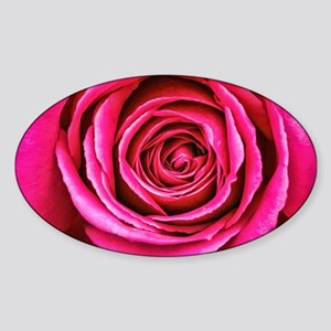 Hot Pink Rose Closeup Sticker (Oval)