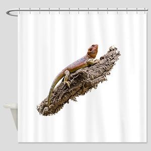 Central Bearded Dragon (Pogona vitt Shower Curtain