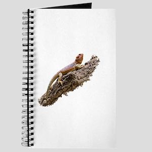 Central Bearded Dragon (Pogona vitticeps) Journal