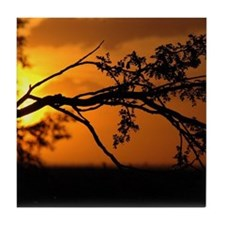 Branch with Sunset Tile Coaster
