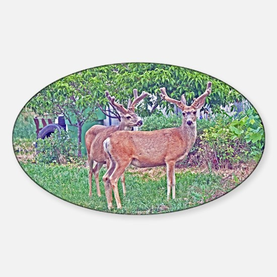 Valley Bucks Sticker (Oval)
