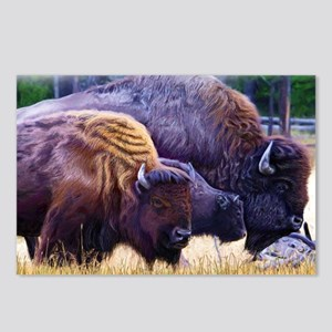 American Bison Family Postcards (Package of 8)