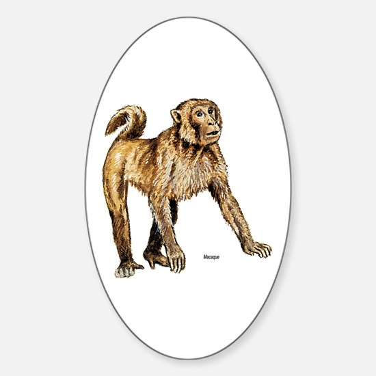 Macaque Monkey Oval Decal