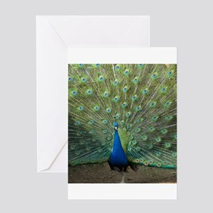Peacock20160601 Greeting Cards