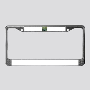 Peacock20160601 License Plate Frame