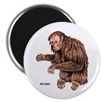Red Uakari Monkey Magnet