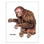 Red Uakari Monkey Small Poster