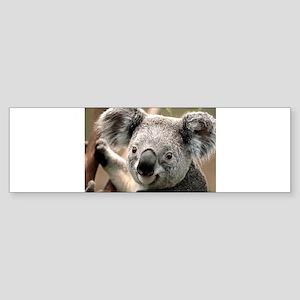 Koala Bumper Sticker