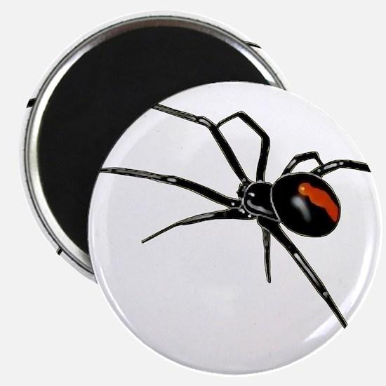 BLACK WIDOW SPIDER Magnets