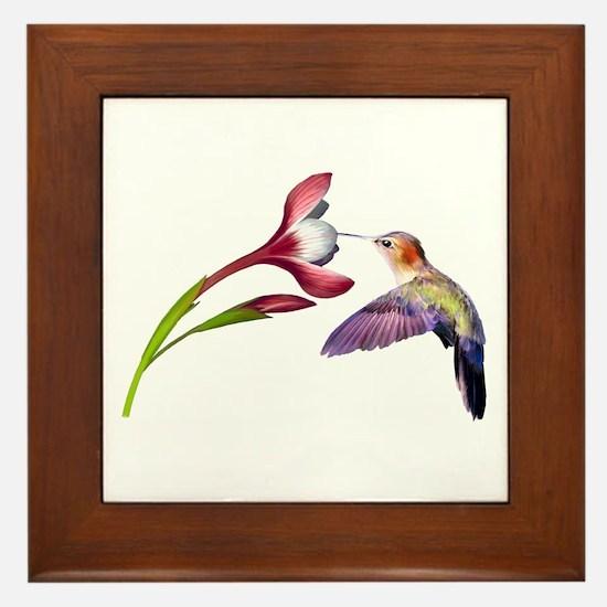Hummingbird in flight Framed Tile