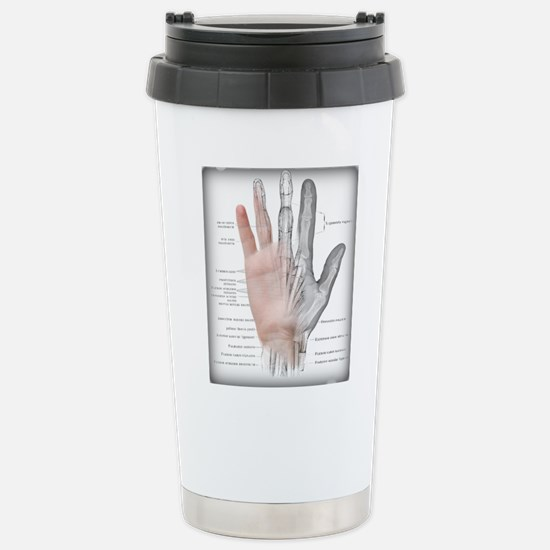 Visible Hand With Anatomy Mugs