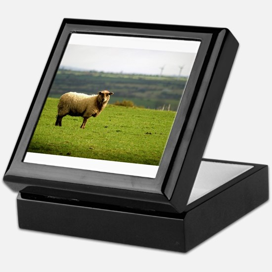 Solitary Sheep Keepsake Box