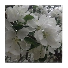 Apple Blossoms Tile Coaster