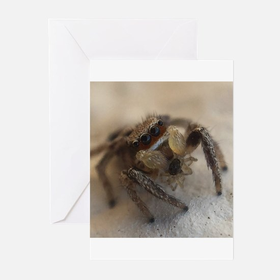 Jumping Spider Snacking Greeting Cards