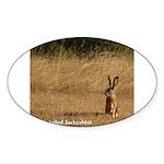 Jackrabbit Sitting Oval Sticker