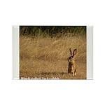 Jackrabbit Sitting Rectangle Magnet (100 pack)