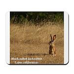 Jackrabbit Sitting Mousepad