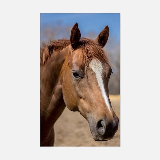 Cute American quarter horse Sticker (Rectangle)